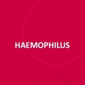 VACINA HAEMOPHILUS